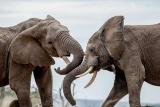 ギャラリー:ケニアやナミビア、アフリカの自然保護区や国立公園に暮らす野生動物たち 写真7点