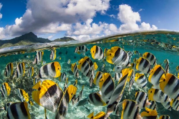 ギャラリー:一度は訪れてみたい、世界のベスト・ダイビングスポット21選