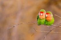 ギャラリー:世界の美しい鳥たち2