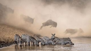 ギャラリー:ナショジオのインスタグラム写真コンテスト、受賞作10点