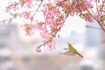ギャラリー:世界の美しい鳥たち4