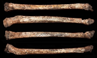 ギャラリー:謎の人類ホモ・ナレディの子どもの骨格、初めて発見 写真5点