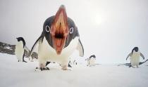 ギャラリー:世界の美しい鳥たち5