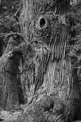 ギャラリー:死にゆく世界の巨木、瀬戸際の森林