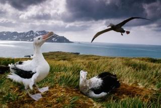 ギャラリー:懸命に子育てする動物界の父親たち 写真7点