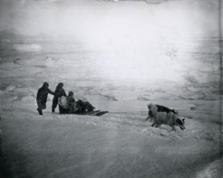 ギャラリー:極地探検で活躍した歴史的なそり犬たち 写真8点