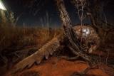 特集ギャラリー:カラハリ砂漠 瀬戸際の生態系、写真と図解15点(2021年8月号)
