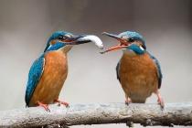 ギャラリー:世界の美しい鳥たち9