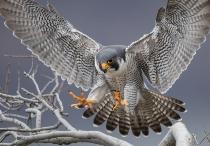 ギャラリー:世界の美しい鳥たち10