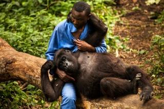 ギャラリー:親を失ったゴリラ「ンダカシ」、飼育員に愛された14年 写真9点