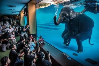 ギャラリー:野生生物写真コンテスト2021、受賞作15点
