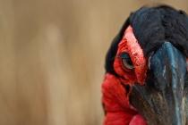 ギャラリー:世界の美しい鳥たち11