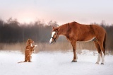 ギャラリー:犬と世界を旅する 写真39点