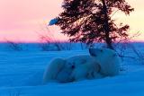 ギャラリー:北米ノースウッズ、森と湖の世界に野生の輝きを求めて、写真12点