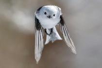 ギャラリー:世界の美しい鳥たち12