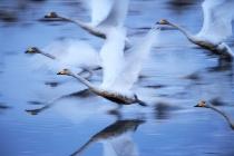 ギャラリー:世界の美しい鳥たち