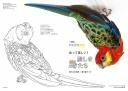 【特製付録】塗り絵ブック「愛しき鳥たち」
