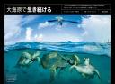 "<div class=""bpimage_title"">大海原で生き続けるウミガメ</div>"