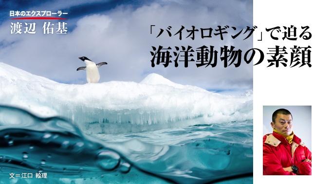 """海洋動物に記録装置を取り付け、そのデータから見えない生態を""""観察""""する生物学者、渡辺佑基。種の違いを超えた生命の法則を見つけるのが目的だ。"""