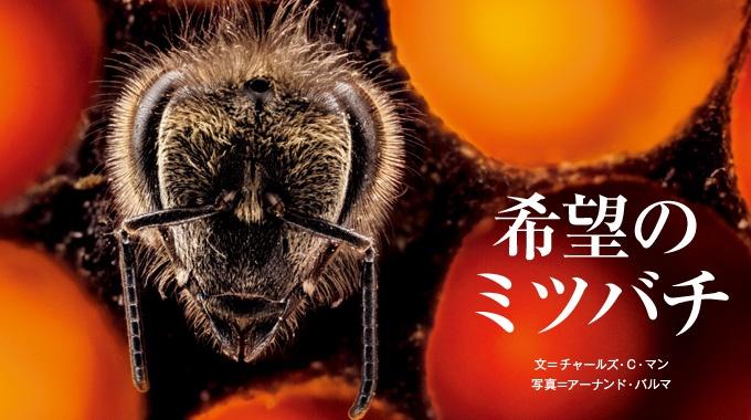 90億人の食 希望のミツバチ
