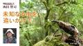 日本のエクスプローラー 西田賢司 未知なる虫を追いかけて