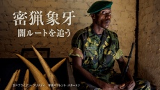 密猟象牙の闇ルートを追う アフリカ発 特別調査レポート