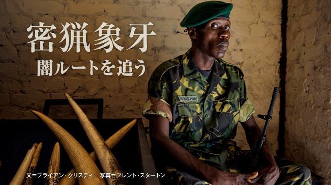 象牙の精巧な模造品をアフリカの闇市場へ流し、内蔵のGPSで輸送ルートを追跡する特別取材を敢行。残虐な密猟者たちの足取りが浮かび上がってきた。