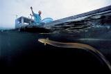 天然ウナギを捕る琵琶湖の漁師