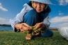アオサを摘む沖縄のおばあちゃん