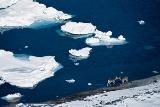 流氷の海辺でエゾシカに出会う