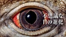 不思議な目の進化