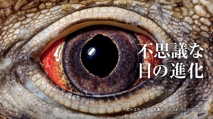 原始的なミミズの目から高性能なワシの目まで、動物界には驚くほどさまざまな目がある。動物の目とその進化をめぐる、最新の研究成果を紹介する。