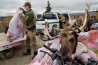 密猟者によって殺されたヘラジカを、レンジャーたちが押収する。当局によると、2人の密猟者が標識を無視して公園内に1キロ以上も入り込んで、ヘラジカを射殺したという。