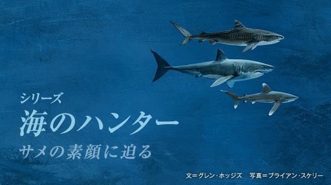 サメのなかでも凶暴と恐れられるイタチザメが、人間を襲う件数が増えている。このサメの素顔を見たいと、新米ダイバーの筆者がバハマの海に潜った。