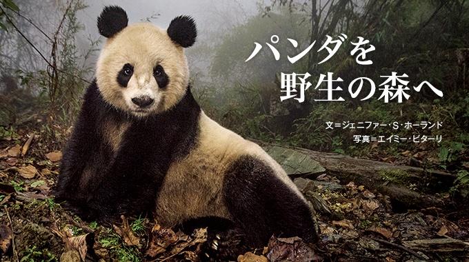 中国は、ジャイアントパンダを飼育下で繁殖させることに成功し、順調にその数を増やしている。次の挑戦は生息地を保全し、パンダを野生に戻すことだ。