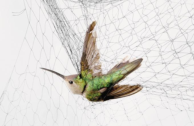 捕らわれの鳥たち