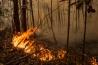 インドネシアでは農耕地にするため、2015年だけで約250万ヘクタールの森林が焼かれた。