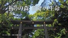 明治神宮 祈りの森、百年の生命