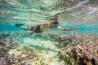 <b>ミッドウェー諸島</b><br>北太平洋の米領ミッドウェー諸島の海で、シュノーケリングをするオバマ大統領(当時)。多忙な大統領にとって「本当に貴重な時間だったはず」と写真家のスケリーは語り、この写真が海洋保護への関心を高めることを願っている。