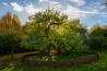 <b>ニュートンのリンゴの木</b><br>リンカーンシャー(英国イングランド地方)<br><br>物理学者アイザック・ニュートンの生家の前にあるリンゴの木。その枝から落ちるリンゴを見たのがきっかけでニュートンは思索を深め、万有引力の法則の発見に至ったことが、1752年に公表された伝記によって裏づけられた。元の木は1820年頃に嵐で倒れたが、根から再生した木が今では立派に成長している。