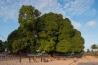 村人が集い話し合う <b>マンゴーの木</b><br>ナウンデ(モザンビーク)<br><br>モザンビーク北部の村にそびえるマンゴーの巨木は、アフリカの強烈な日差しを遮って木陰をつくるが、人々が集まる理由はそれだけではない。ガーナ出身のコフィ・アナン元国連事務総長は、回顧録にこう書いている。「そこは人々が話し合い、意見の相違を調整し、もめごとを解決する場所だ。もし解決策が見つからなければ、次の日にまた同じ木の下に集まり、対話を続ければいい」