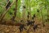 自然保護区に暮らすクロザルの群れ。森をあちこち移動しながら、食事をしたり、毛づくろいをしたり、なで合ったりしながら1日を過ごす。群れから離れているときは、鳴いて居場所を確認し合う。