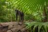 森で出合った成獣の雄。体重は9キロを超えているだろう。雄が乗っている木は自然に倒れたのかもしれないが、森林伐採や道路建設、農園の拡大などが、クロザルの減少に拍車をかけている。