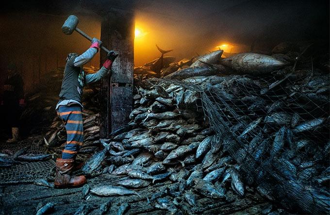南シナ海 枯渇する水産資源