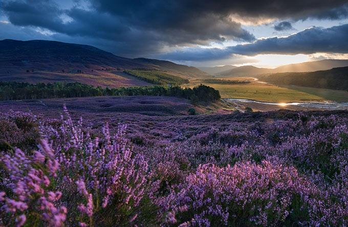 スコットランド 荒れ野の未来