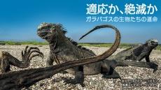 適応か、絶滅か ガラパゴスの生物たちの運命