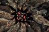 サンタ・クルス島のチャールズ・ダーウィン研究所で、在来種の植物の種子の周りに並べられた、さまざまな種のダーウィンフィンチ。ガラパゴスの鳥たちは、餌になる種子に合わせて、くちばしの大きさや幅、形を変化させてきた。