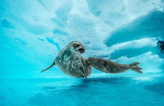 南極 氷の下の優美な別世界