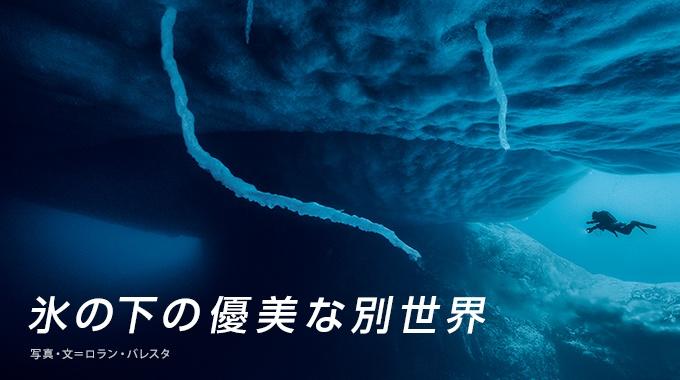 「特別レポート:南極の氷と海」パート2では、めったに見られない南極の氷の下を探検しよう。ペンギンやアザラシ、そして、数々の不思議な生き物たち。極寒の海に潜ると、活気と色彩に満ちた世界が広がっていた。