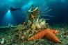 幅が30センチ以上もあるモミジガイ科のヒトデのそばには、ヒモムシとハボウキゴカイの仲間、木のような海綿動物がいる。<br>学名 <i>MACROPTYCHASTER SP.</i>(ヒトデ), <i>PARBORLASIA CORRUGATUS</i>(ヒモムシ), <i>FLABELLIGERA SP.</i>(ハボウキゴカイ), <i>HOMAXINELLA BALFOURENSIS</i>(海綿動物)
